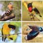 Winged Wonders: Malaysian Heritage b